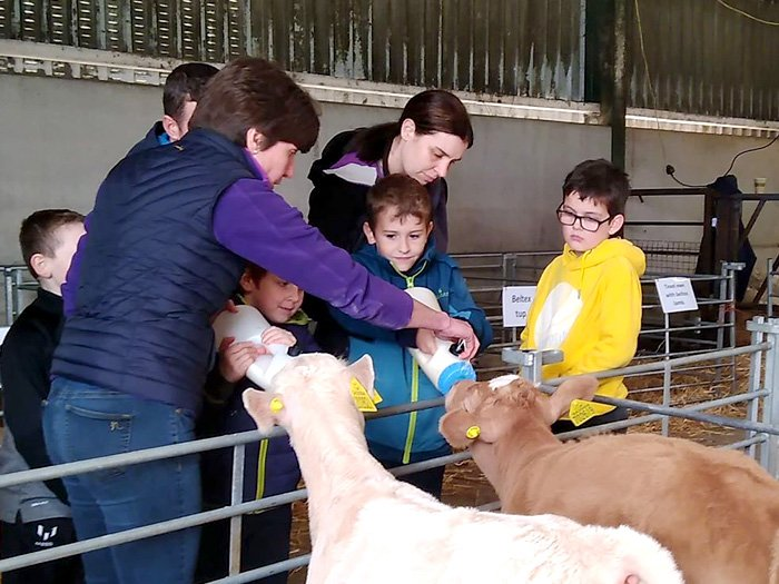 Feeding time for hungry calves during one of the farm tours on LEAF's Open Farm Sunday.